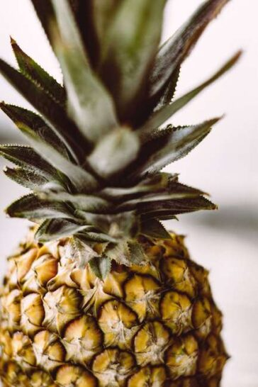 Standing Whole Pineapple fruit
