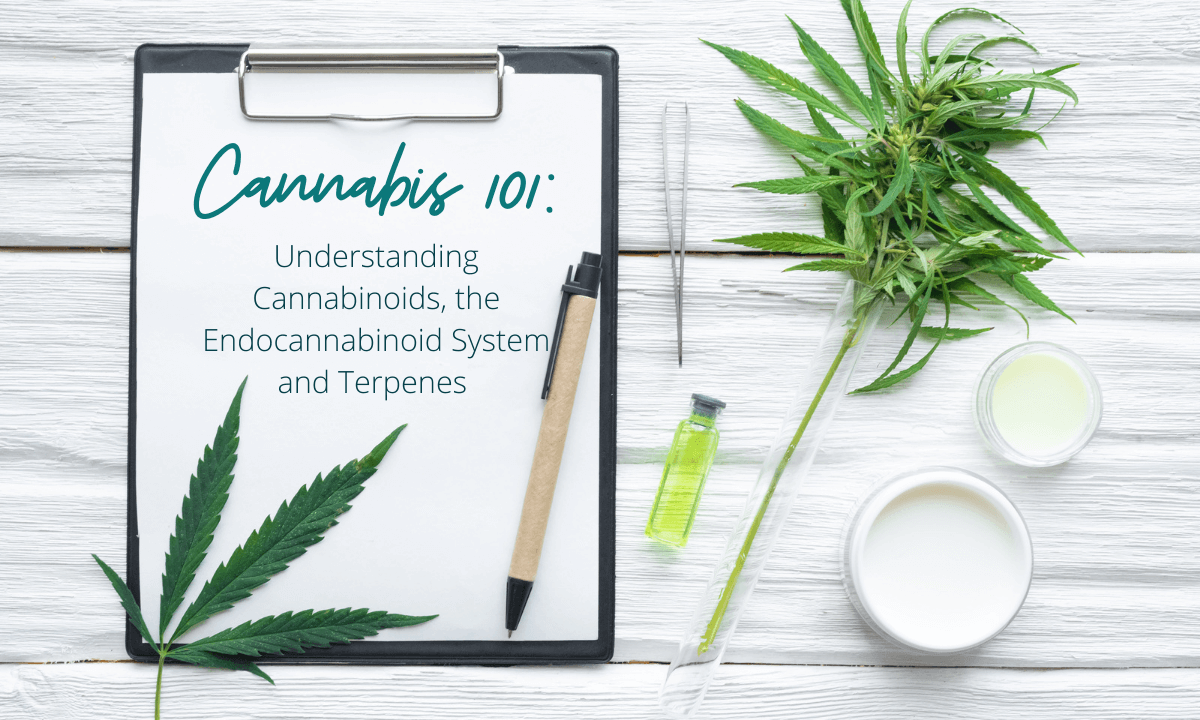 Cannabis 101 Understanding Cannabinoids, the Endocannabinoid System and Terpenes Featured Image