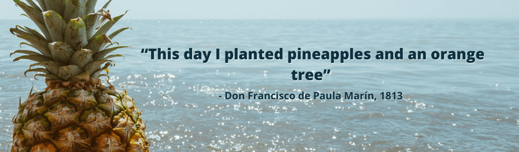 """facts about pineapple don francisco de paula marin quote """"this day I planted pineapples and an orange tree"""" from 1813 with real pineapple looking over the ocean"""