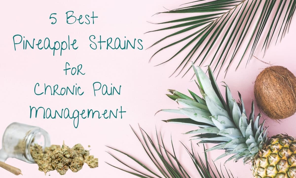 5 best pineapple strains for chronic pain management with a jar of tipped over cannabis buds, a joint, a whole pineapple and a whole coconut on a pink background
