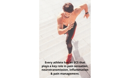 Image of male athlete sprint training up stairs with text every athlete has an ECS that plays a key role in pain sensation, neurotransmission, inflammation and pain management